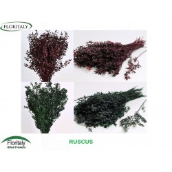 RUSCUS GREEN-BORDEAUX PRESERVED
