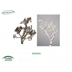 BONSAI NATURAL WHITE AND COLORED